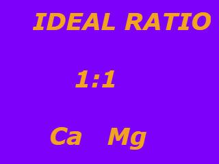 Important minerals in our body Calcium and Magnesium